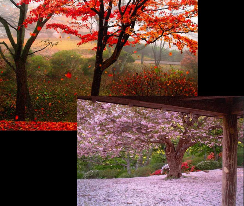 きみまち阪県立自然公園の桜と紅葉